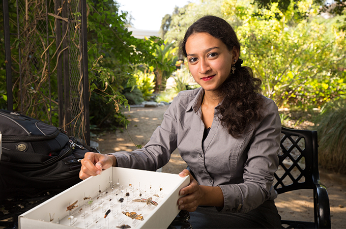 A student sits in the LaFourcade Garden and displays a box of pinned insects.
