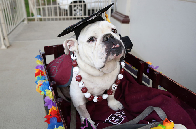 Thurber in his wagon at his graduation ceremony.