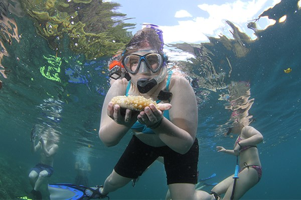 Christina Weisbruch '17 holds a mushroom coral. (Photo by Ron Leidich)