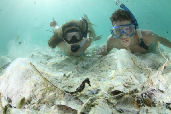Students looking at seahorses in Palau